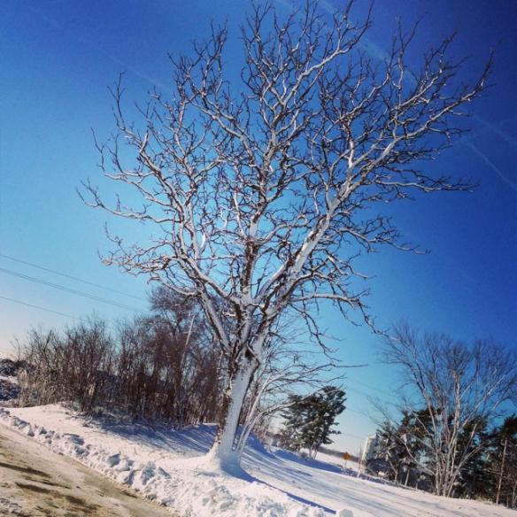 sticky snow1