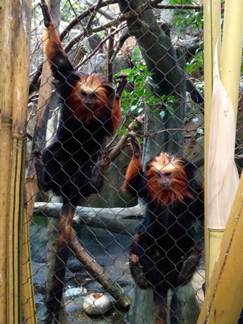 Zoos & Brews 01