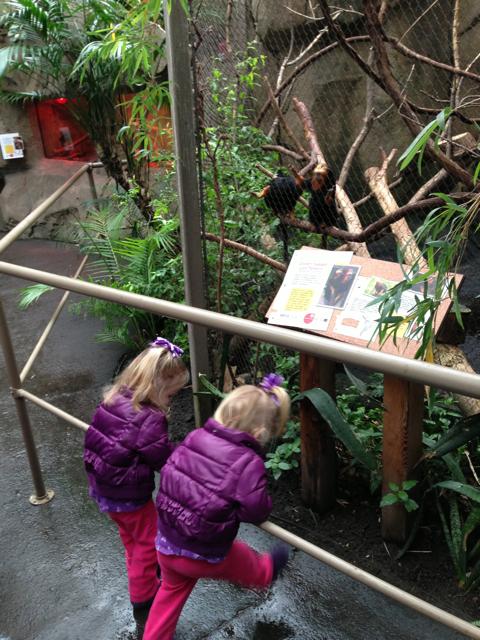Zoos & Brews 02
