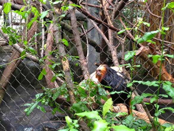 Zoos & Brews 22